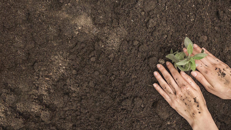 Trapianto germoglio agricoltura