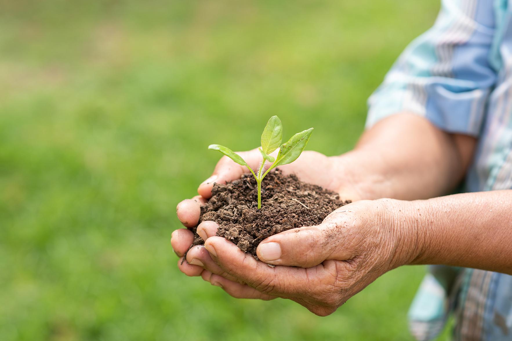 I benefici dei biostimolanti genomici nell'agricoltura
