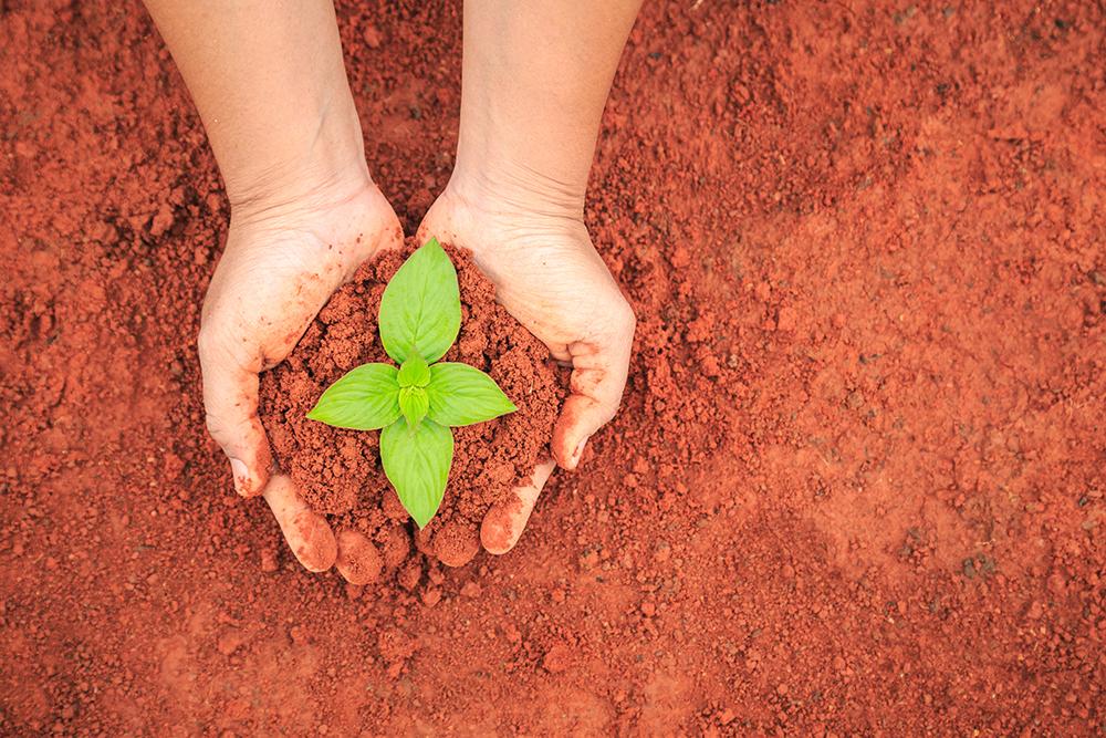 Immagine che simboleggia la nascita di una pianta