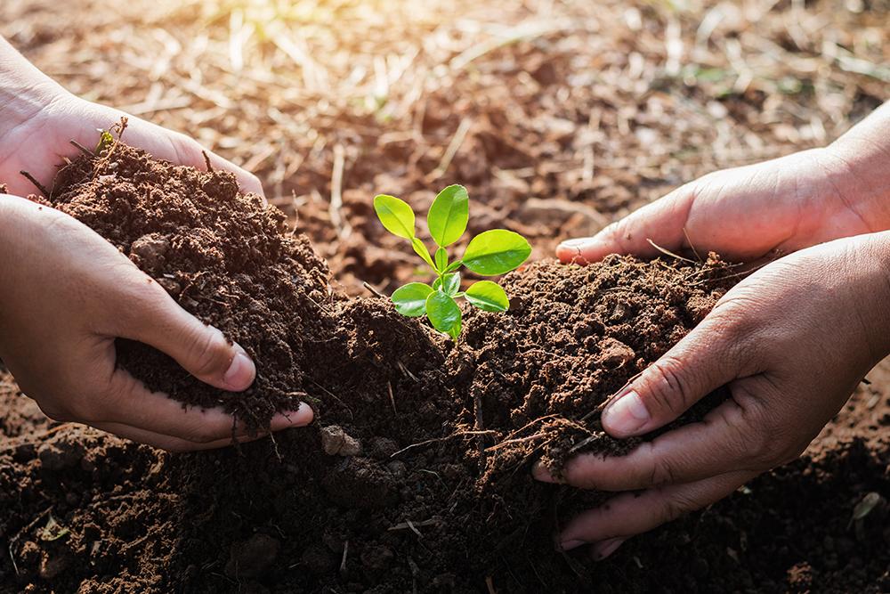 Biostimolante genomico Respect nell'agricoltura