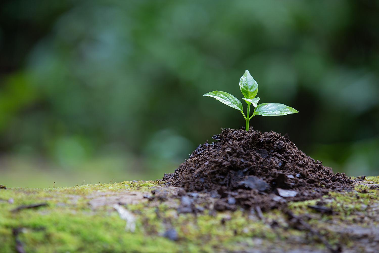 Benefici biostimolanti nell'agricoltura