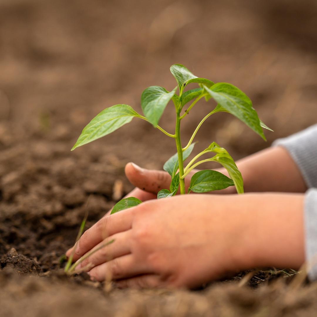 I vantaggi nell'utilizzo di concimi organici