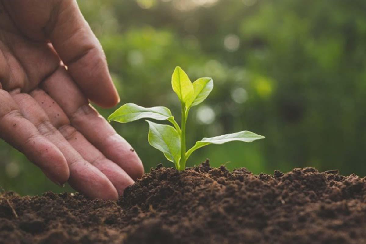 vendita-biostimolanti per agricoltura