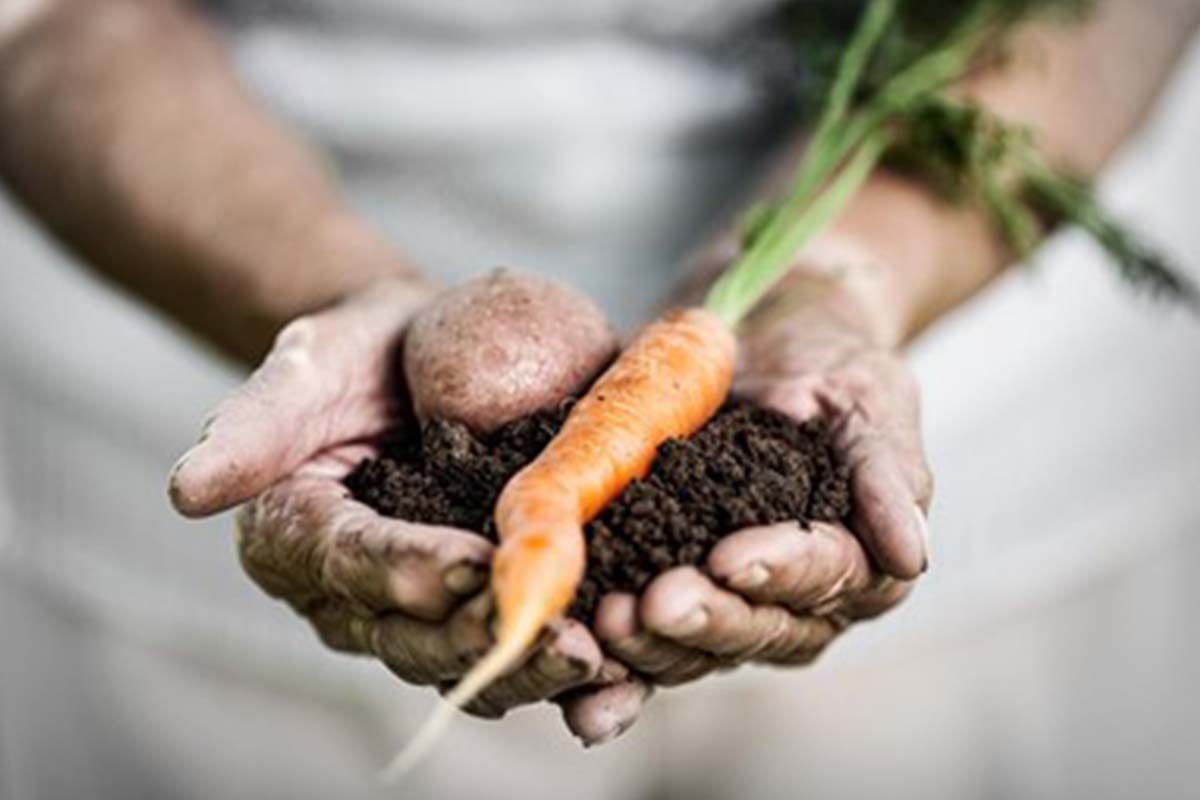 vendita chelati per agricoltura