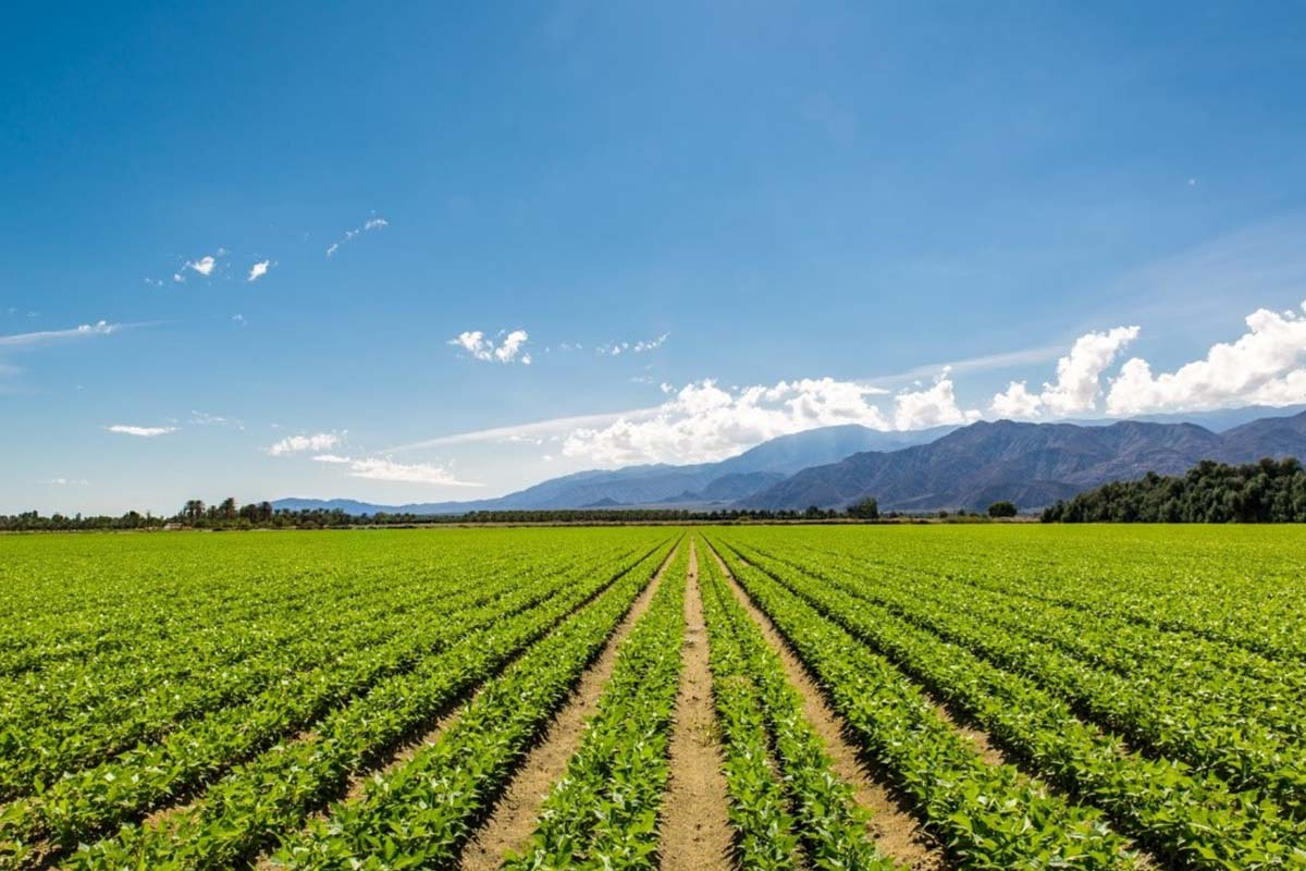 vendita concimi per agricoltura biologica